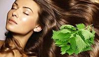 Отзывы о крапиве для ополаскивания волос для роста