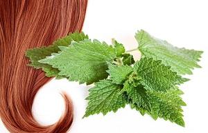Какие есть отзывы о ополаскивании волос с отваром крапивы?