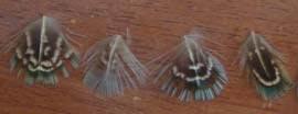 дизайн ногтей с перьями