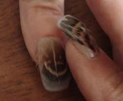 дизайн ногтей перья